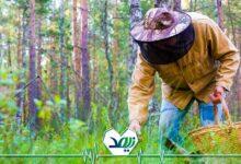Photo of پرورش قارچ کاری کم زحمت و پردرآمد در دوران بازنشستگی