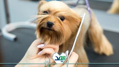 تصویر از نگهداری از حیوانات خانگی توسط سالمندان، خوب یا بد؟